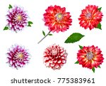 Collage Of Colorful Dahlia...