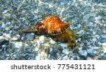 Underwater Photo Of Sea Snail...