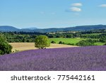 stunning landscape with... | Shutterstock . vector #775442161