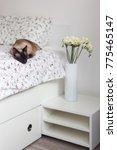 my cozy home bobtail cat | Shutterstock . vector #775465147