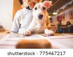 beautiful jack russell terrier... | Shutterstock . vector #775467217