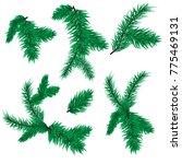 fir tree branch vector... | Shutterstock .eps vector #775469131