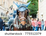 portrait of horse drawn... | Shutterstock . vector #775512379