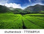 amazing landscape view of tea... | Shutterstock . vector #775568914