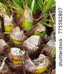 Palm Trunk Texture            ...
