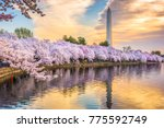 washington dc  usa at the tidal ... | Shutterstock . vector #775592749