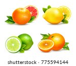 fresh citrus fruits whole and... | Shutterstock . vector #775594144