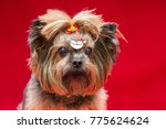 cute yorkshire dog on...   Shutterstock . vector #775624624