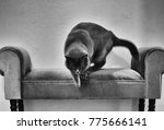 Stock photo artistic grungy black and white image of cat in motion blur jumping from sofa 775666141