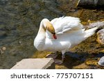 Small photo of Swans Manlius NY