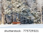 snow covered bench in the... | Shutterstock . vector #775729321