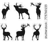 silhouette deer on white... | Shutterstock . vector #775760155