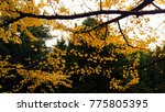 autumn landscape in a rainy day.... | Shutterstock . vector #775805395