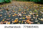 autumn landscape in a rainy day.... | Shutterstock . vector #775805401