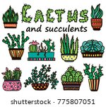 cacti set  succulents  home... | Shutterstock .eps vector #775807051