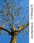 Small photo of view into a tree crone in front of blue sunny sky