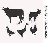 silhouette of vector cattle ... | Shutterstock .eps vector #775916857
