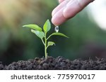 farmer's hand watering a young... | Shutterstock . vector #775970017
