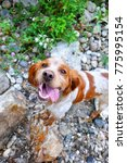 hunting dog on the background... | Shutterstock . vector #775995154