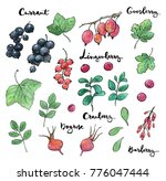 hand drawn painted set of... | Shutterstock . vector #776047444