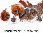 animal friends. true pet... | Shutterstock . vector #776052709