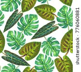 tropical background. tropical... | Shutterstock . vector #776060881