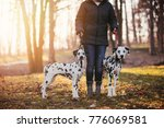 Stock photo dog walker with dalmatian dogs enjoying in park 776069581