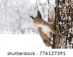 funny red squirrel sits on tree ... | Shutterstock . vector #776127391