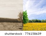 Small photo of Ecology concept change tree forest drought and forest refreshing