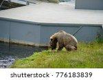 Small photo of Kodiak Island Alaska Brown Bear and Cubs at Frazier Lake Salmon Fishing