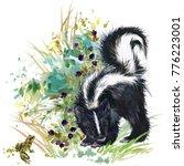 skunk. forest animals... | Shutterstock . vector #776223001