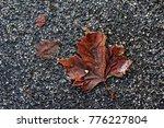 Frozen Fallen Leave During A...