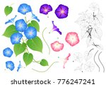blue pink and purple morning... | Shutterstock .eps vector #776247241
