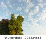 Small photo of view of green trees in the sky with could.