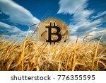 bitcoin rising from ripe ears...   Shutterstock . vector #776355595