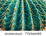 thorn cactus texture background ... | Shutterstock . vector #776366485