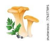 chanterelle   cantharellus... | Shutterstock .eps vector #776377891