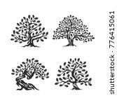 huge and sacred oak tree... | Shutterstock .eps vector #776415061