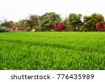 panoramic view of a vegetable... | Shutterstock . vector #776435989