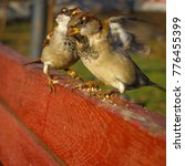 Small photo of Image of sparrow on nature background. Bird. True sparrows, or Old World sparrows