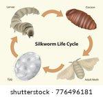 silkworm life cycle.  | Shutterstock .eps vector #776496181
