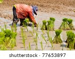 there is a farmers are planting ... | Shutterstock . vector #77653897