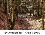 Stock photo forest in autumn selva de irati spain 776541997