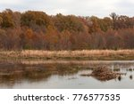 fall scene  beaver lodge on... | Shutterstock . vector #776577535