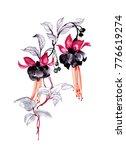 watercolor hand drawn beautiful ... | Shutterstock . vector #776619274