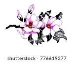 watercolor hand drawn beautiful ... | Shutterstock . vector #776619277
