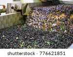 fresh virgin olive oil... | Shutterstock . vector #776621851
