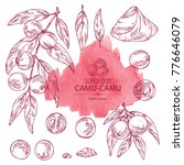 collection of camu camu  branch ... | Shutterstock .eps vector #776646079