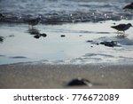 the ocean life | Shutterstock . vector #776672089