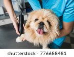 closeup of trimming paw by... | Shutterstock . vector #776688481